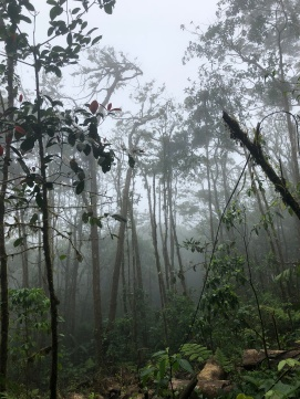Cloud forest2