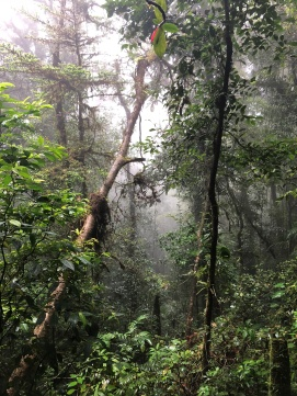Cloud forest3