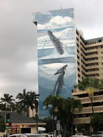 Honolulu -- whale