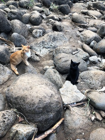Kalalau Trail -- Kitty friends