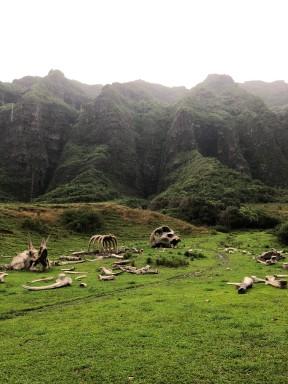 Kualoa Ranch -- Kong graveyard