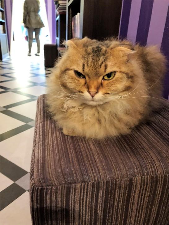 angriest cat