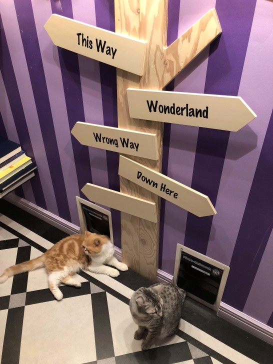harajuku cat cafe