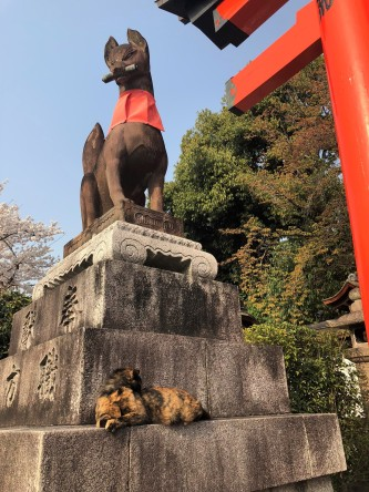 inari shrine cat