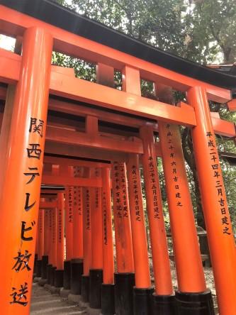 inari torii gates