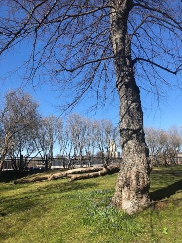 tree fortress island